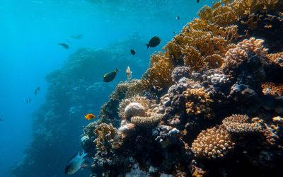 La plongée sous-marine sur la Presqu'île de Giens avec notre partenaire Divin'Giens.