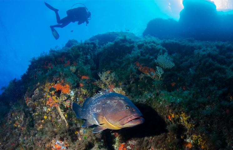 Partez à la découverte de la biodiversité sous-marine exceptionnelle du parc national de Port-Cros!