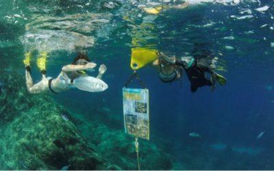 Les sentiers sous-marins à visiter grâce à notre partenaire Divin'Giens